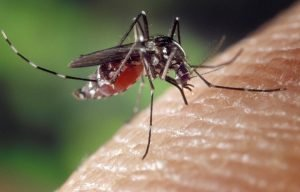 How To Eliminate Mosquitoes Indoors; A Complete Guide For A Mosquito-Free Home.