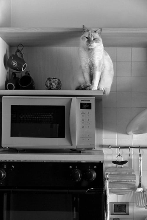 How to Dispose of an old Microwave Oven
